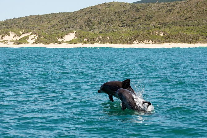 Knysna Eco Marine Dolphin Watching Tour