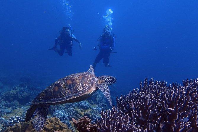 Guam's Best Beach Diving! - Beginner and Advanced Dives
