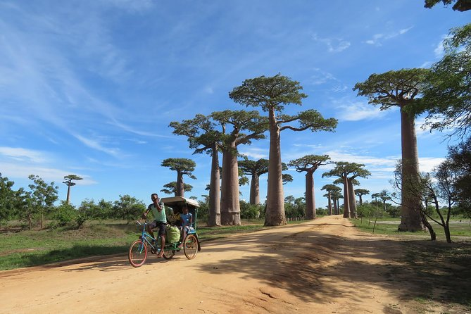 5 Day Tour Baobab Avenue Express from Antananarivo