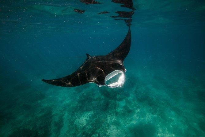 Ningaloo Reef or Muiron Islands Snorkeling and Wildlife Adventure