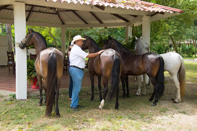 Day of Colombian paso horses and horseback riding on the beach