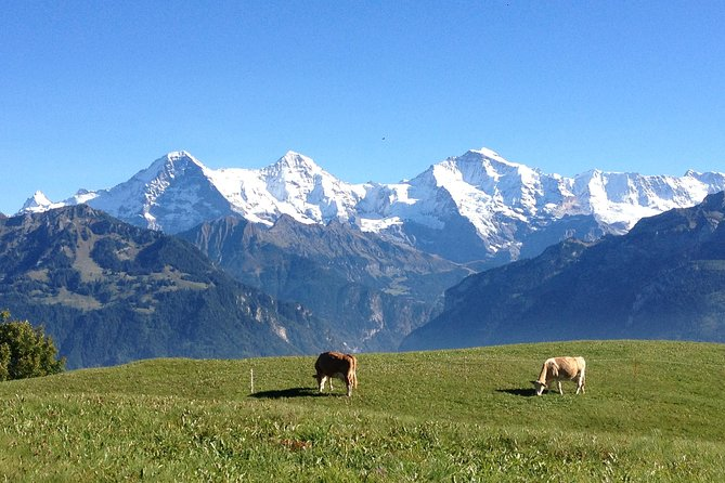 Private Interlaken and Jungfrau Region tour from Lucerne
