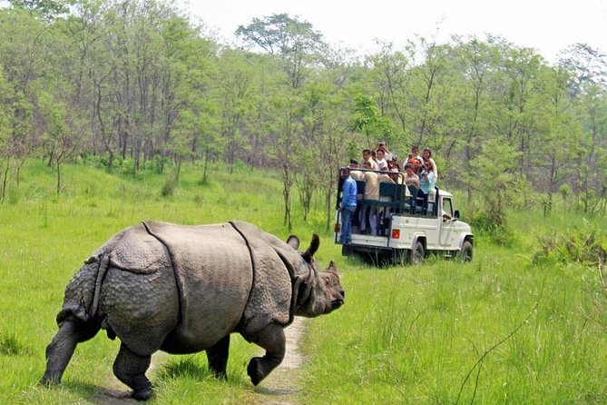 Jungle Safari Tour in Chitwan National Park