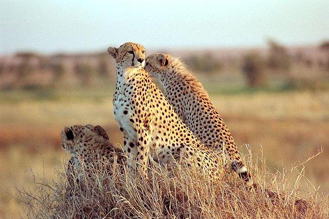 4 Days Safari to Kidepo Valley National Park