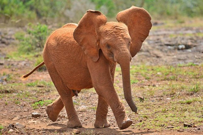 Giraffe Center & Elephant Orphanage Guided Day Tour From Nairobi