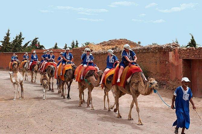 Sunset Tour & Dromedary Ride At Palm Grove Of Marrakech