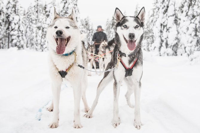 Be a musher! Husky tour into the arctic wilderness