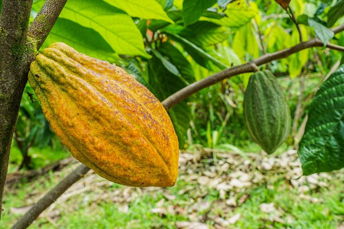 Craft Specialty Coffee Tour in San Carlos, Costa Rica