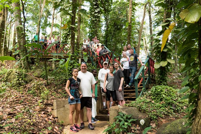 Rainforest Hike Adventure