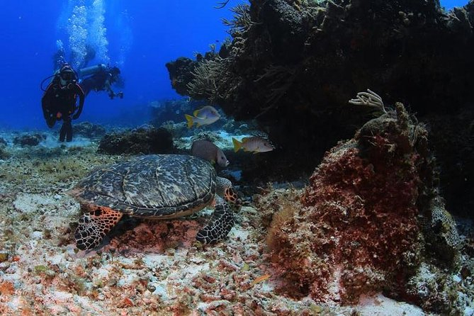 Scuba Diving for Beginners in Cancun