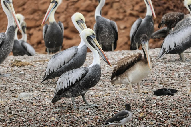 Ballestas Islands + Paracas National Reserve from Lima (Small group) photo 8