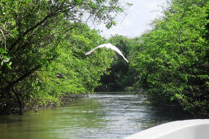 Tres Palos Lagoon, Boat Ride Tour with Lunch & Baby Turtle Release