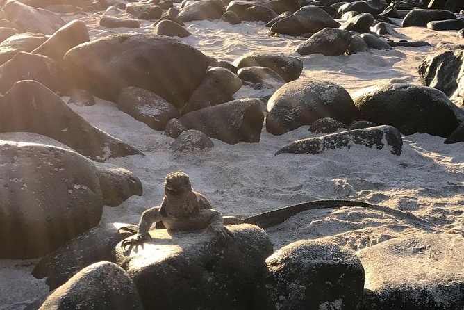 12 Day Galapagos Expedition (Tourist Class)