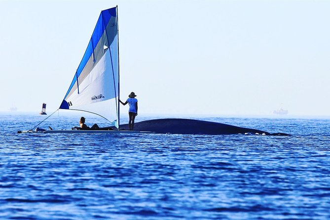 Whale Watching & Sailing Adventure