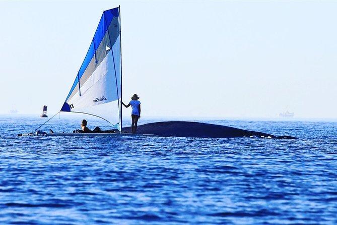 Ketchikan Sailing Adventure