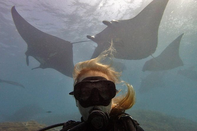 Try Dive with Manta Rays in Bali