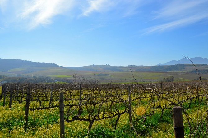 Stellenbosch Guided Winelands Cycle Tour photo 7