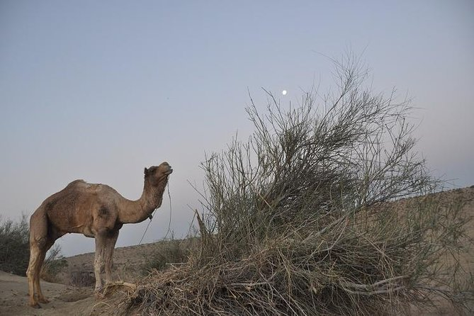 Non-Touristic Overnight Camel Safari