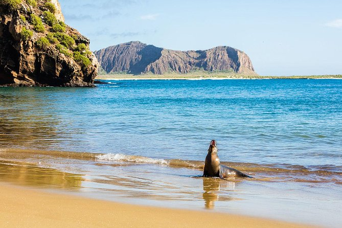 Galapagos Cruise Deals 5 and 8 Days photo 2