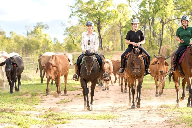 Ride the Outback at Ironbark House Dimbulah Horse Riding