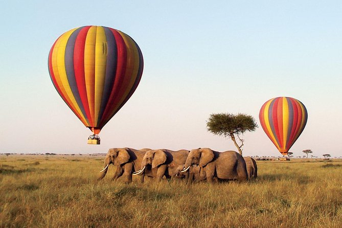 6 Days Kenya Lodge Safari Packages photo 4