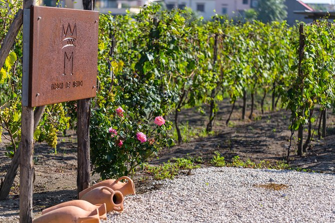 Private tour of Pompeii Ruins, Organic Wine tasting and Lunch