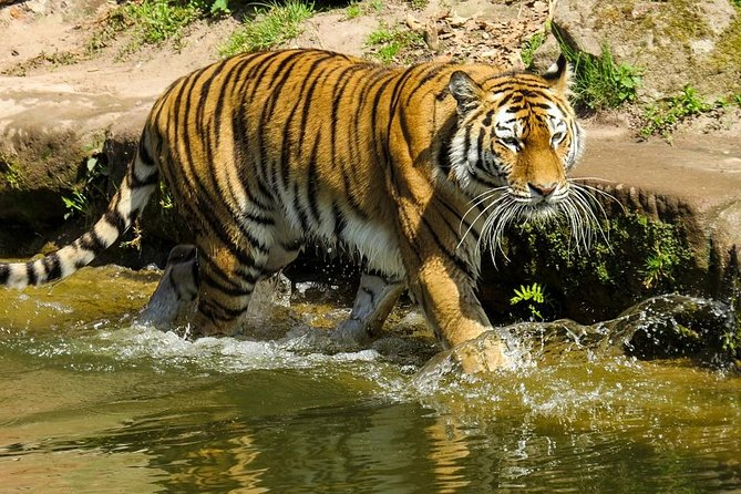 Ranthambore Wildlife Safari, Taj Mahal and Jaipur Tour from Delhi