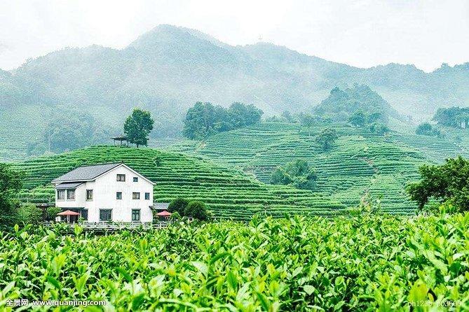 Hangzhou Tea Culture Experience Tour