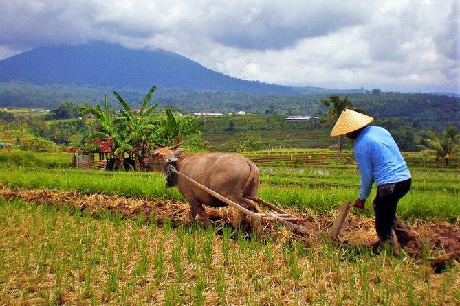 Balinese Rural Farming Experience - Undisan Village