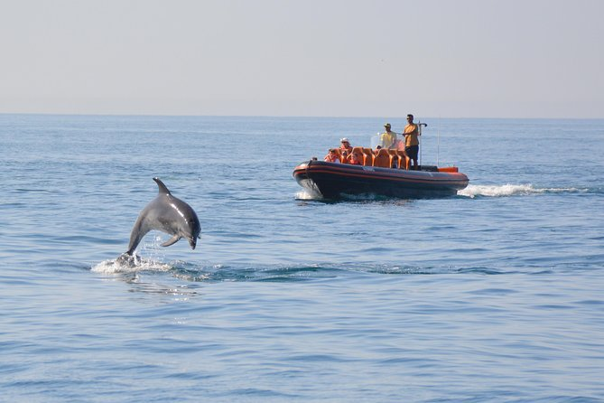 Dolphin Watching and Cave Tour from Vilamoura photo 10