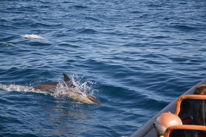 Dolphin Watching and Cave Tour from Vilamoura photo 4