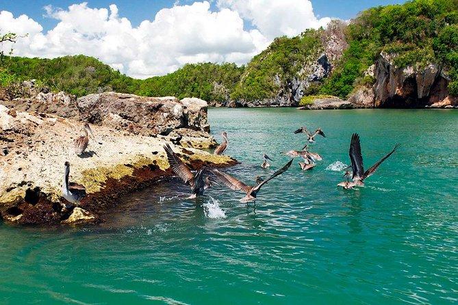 Los Haitises Plus Bacardi Island for Samana Cruise Ship Travelers