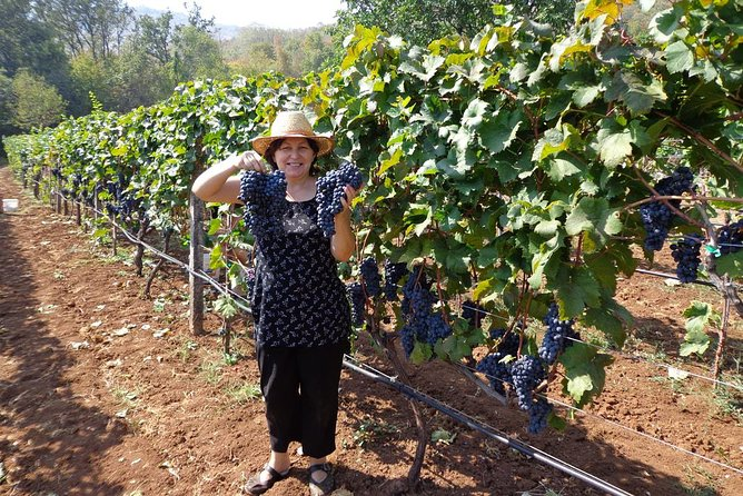 Wine tasting and magical tour from Kotor, Budva, Tivat (Lovcen,Skadar lake)