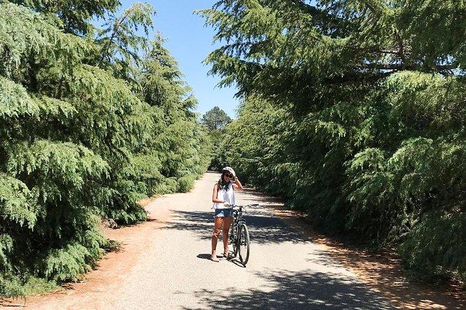 Santa Ynez Valley Wine by Bike Tour