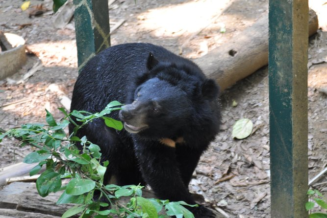 Visit Bear Rescue Center From Agra