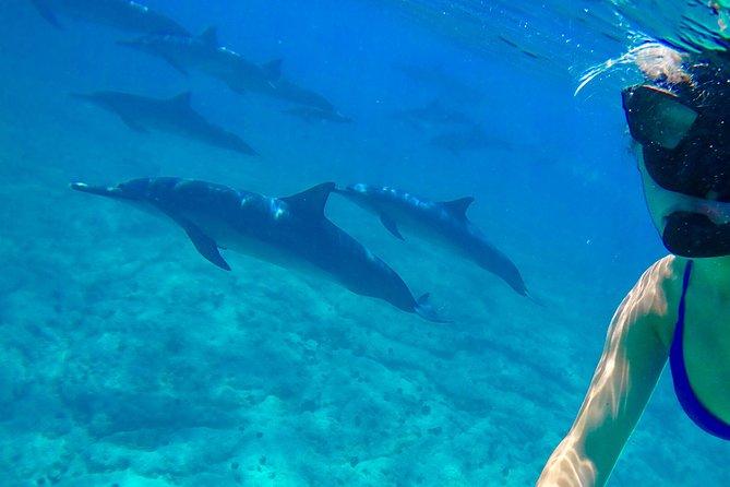 Kona Wild Dolphin Snorkel and Reef Adventure