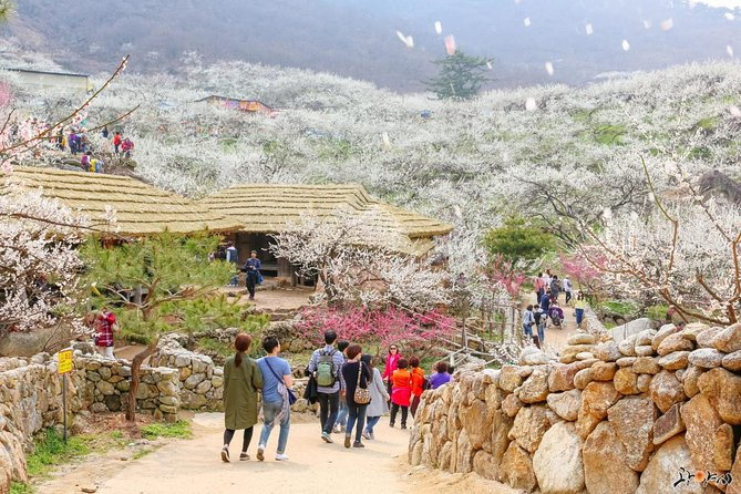 Gwangyang Maewha Flower and Jeonju Hanok Village 1 day trip from Seoul