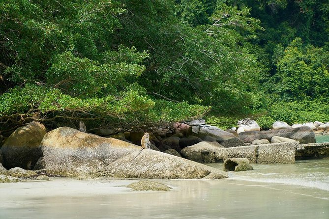 Silver Leaf Monkeys and Firefly Tour with Boat Ride and Seafood Dinner