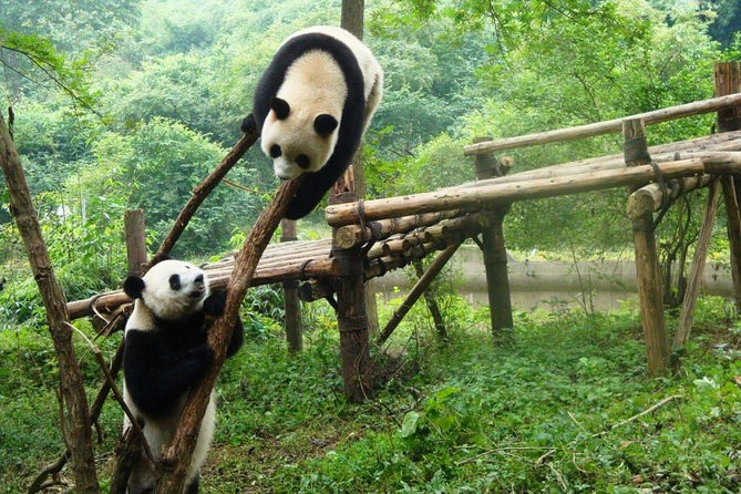 Full day tour to Panda Centre and JinSha Museum