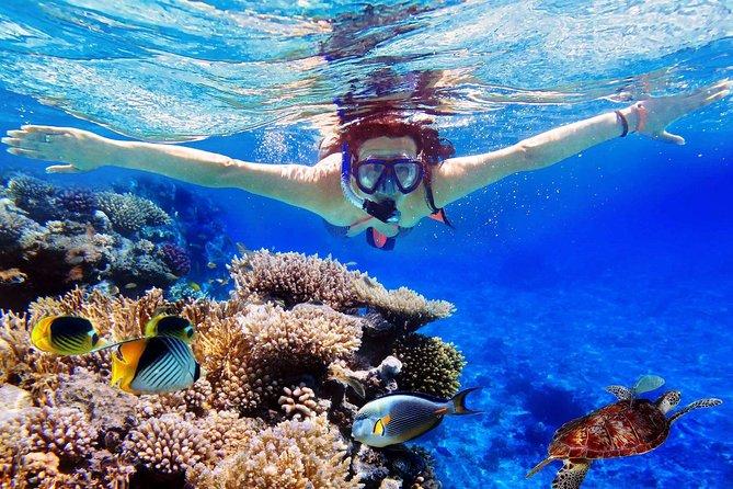Tour de un día de snorkel en la isla Menjangan de Bali