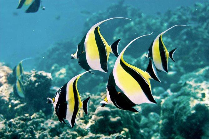 Menjangan Island Snorkeling Day Trip | Reef Drop-Off & Coral Garden