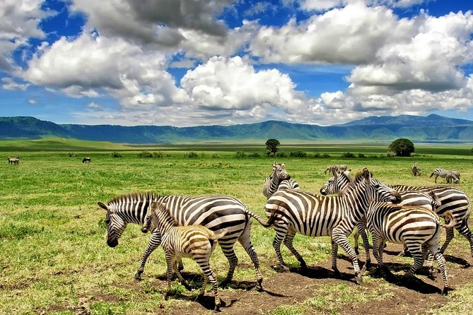 7 Days (6 Nights) Classic Holiday Luxury Safari In Tanzania