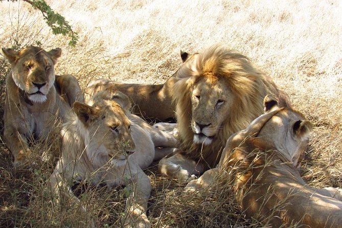 3 Days 2 Nights Maasai Mara Sopa Lodge Safari
