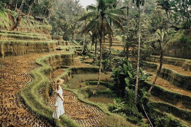 Magical Ubud Rice Terrace Tour