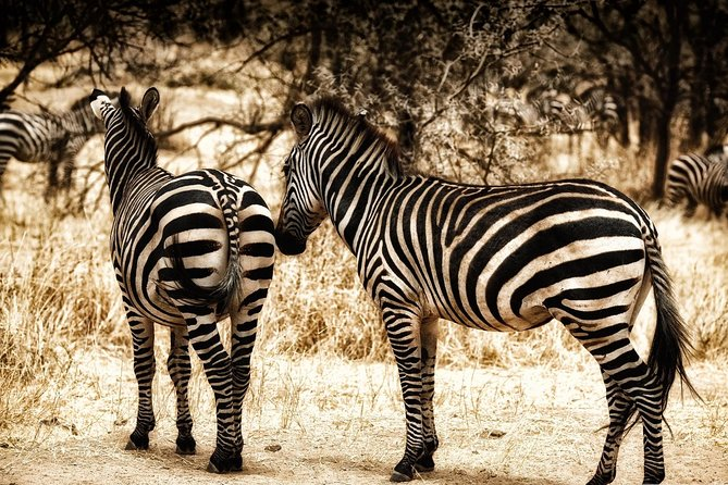 4 Days (3-nights) Classic Luxury Short Safari in Tanzania