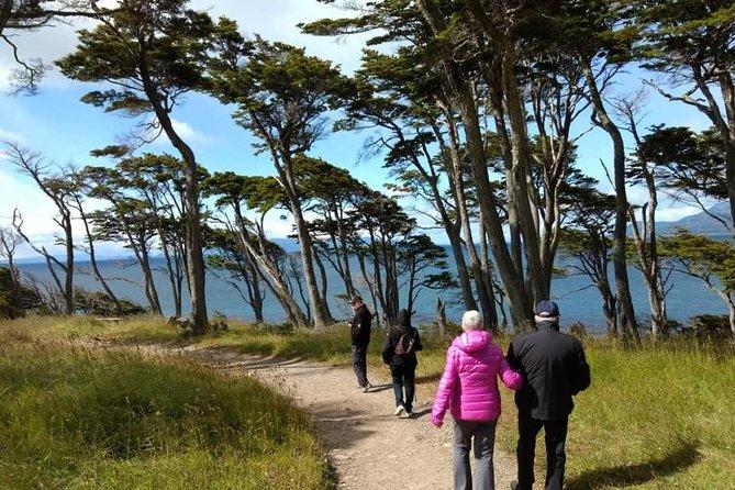 Full-Day Punta Arenas and Magellan Strait Tour