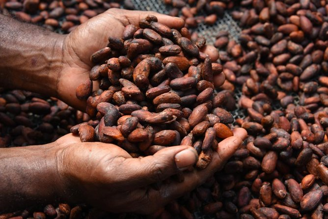 Aelan Chocolate Factory Tour Port Villa Vanuatu