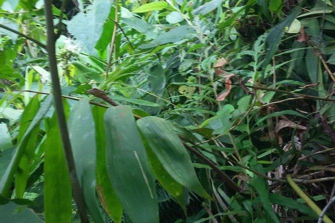 Sinharaja Rain Forest One Day tour
