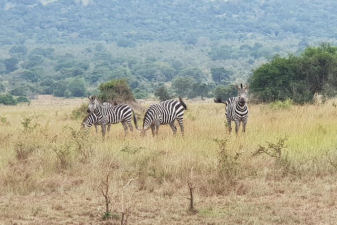One-day Akagera National Park Game Drive with a Choice 4x4