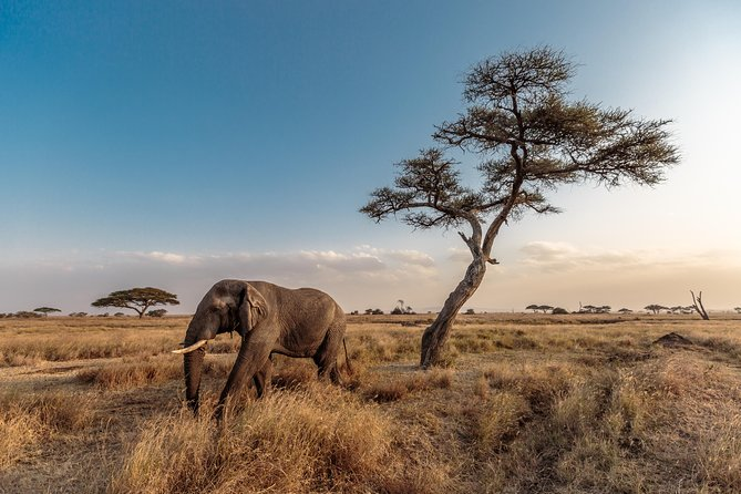 13-Day Kenya and Tanzania Adventure Camping Tour from Nairobi photo 13